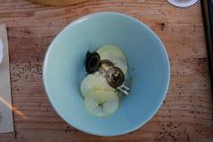 apfel-kren-walnuss-waldorfsalat